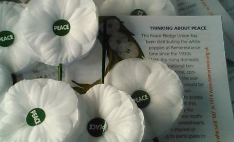 White poppies